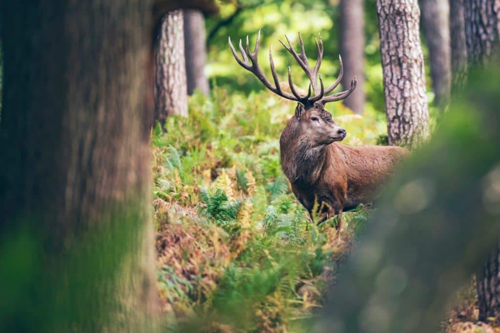 Wyjątkowa przyroda Kampinoskiego Parku Narodowego. Plany wycieczek, szlaki turystyczne. Poznaj miasta: Kampinos, Izabelin, Granica, Leszno, Leoncin, Żelazowa Wola.