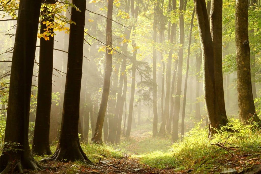 Natura, zwierzęta, mokradła, łąki i piękne lasy to niekończące sięatrakcje Kampinosu, które towarzyszą każdemu turyście